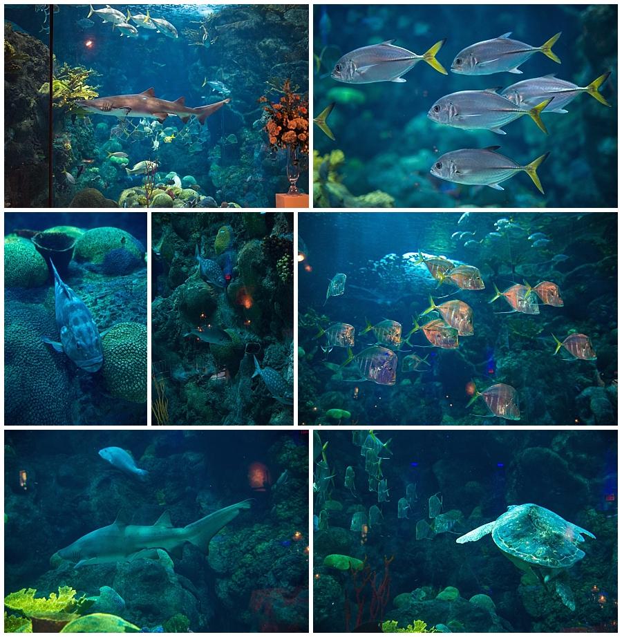 Florida Aquarium details